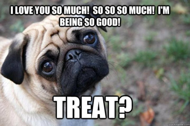 "101 I Love You Memes - ""I love you so much! So so so much! I'm being so good! Treat?"""
