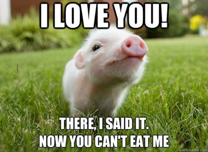 "101 I Love You Memes - ""I love you! There, I said it. Now you can't eat me."""