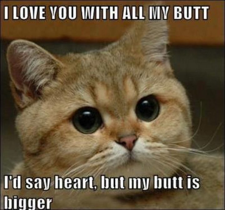 "101 I Love You Memes - ""I love you with all my butt. I'd say heart, but my butt is bigger."""