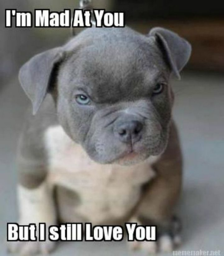 101 I Love You Memes -  mad at you but I still love you.""