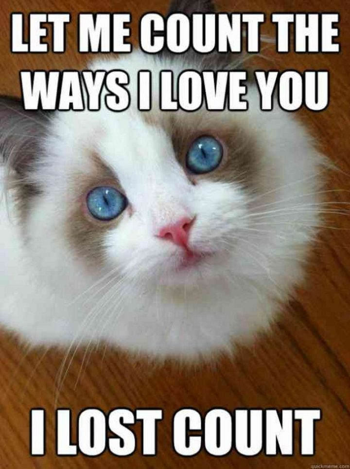 101 I Love You Memes - t me count the ways I love you. I lost count.""
