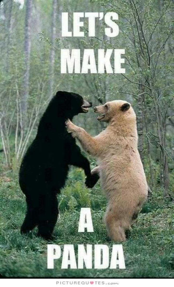 "101 I Love You Memes - ""Let's make a panda."""