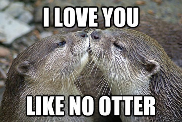 "101 I Love You Memes - ""I love you like no other."""