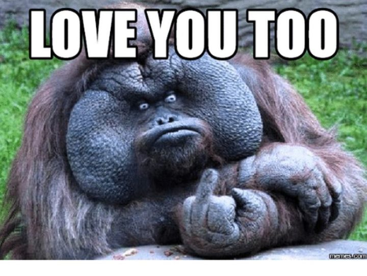 "101 I Love You Memes - ""I love you too."""