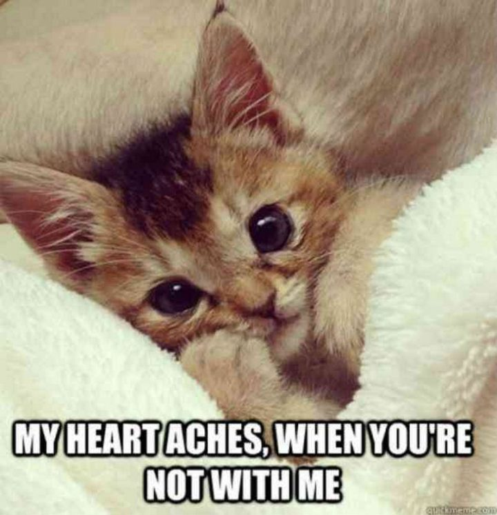 "101 I Love You Memes - ""My heart aches, when you're not with me."""