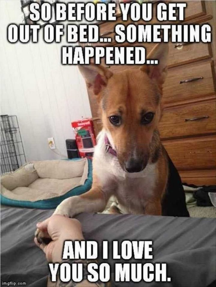"101 I Love You Memes - ""So before you get out of bed...something happened...and I love you so much."""
