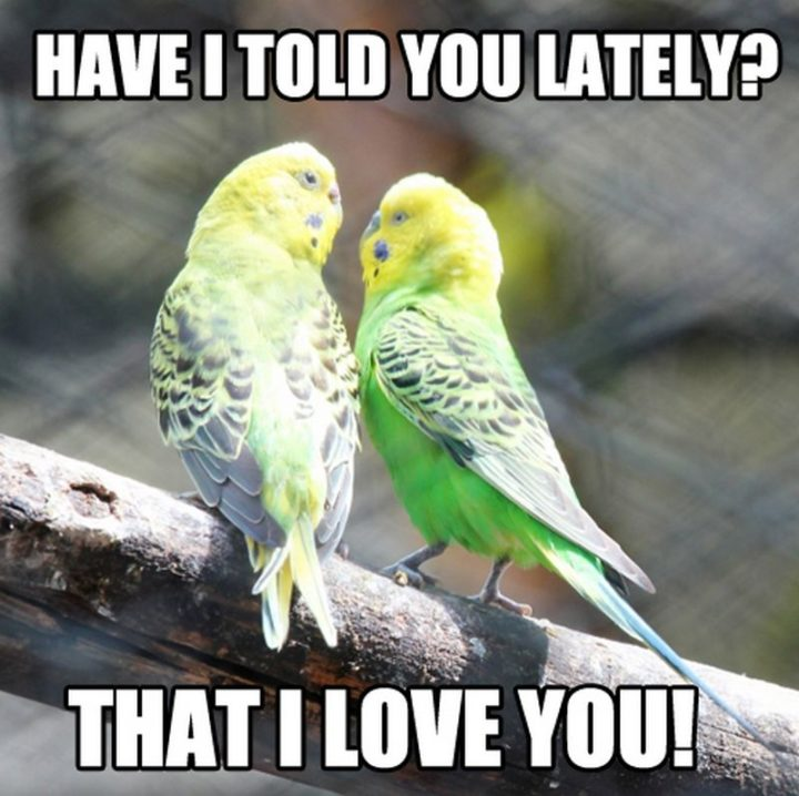 "101 I Love You Memes - ""Have I told you lately that I love you."""