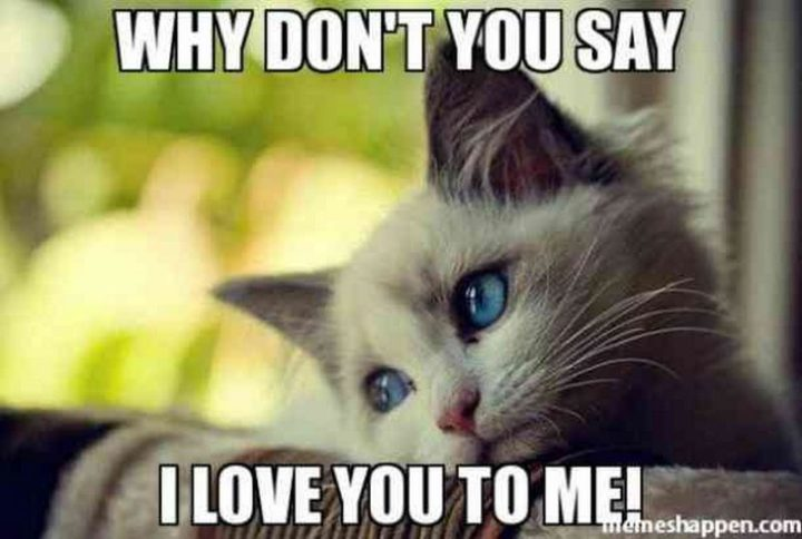 "101 I Love You Memes - ""Why don't you say I love you to me!"""