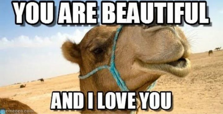 "101 I Love You Memes - ""You are beautiful and I love you."""