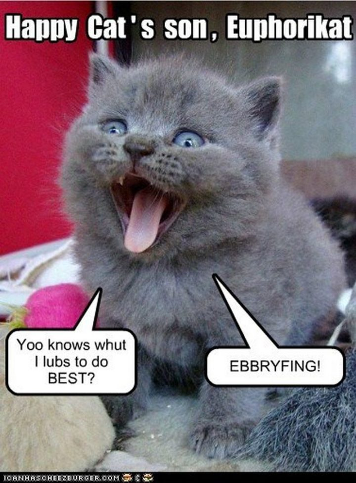 "85 Happy Memes - ""Happy cat's sone, Euphorikat. Yoo knows whut I lubs to do BEST? EBBRYFING!"""