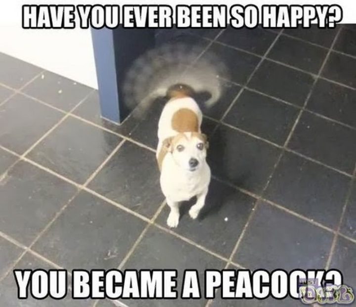 "85 Happy Memes - ""Have you ever been so happy? You became a peacock?"""