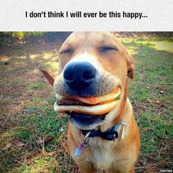 "85 Happy Memes - ""I don't think I will ever be this happy..."""