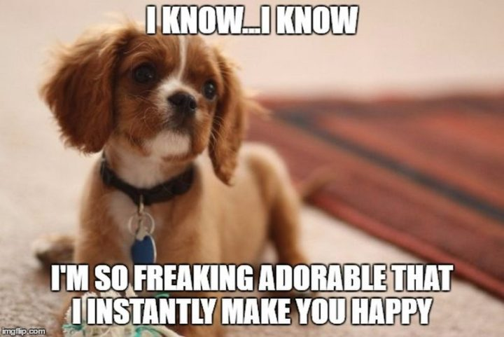 "85 Happy Memes - ""I know...I know. I'm so freaking adorable that I instantly make you happy."""