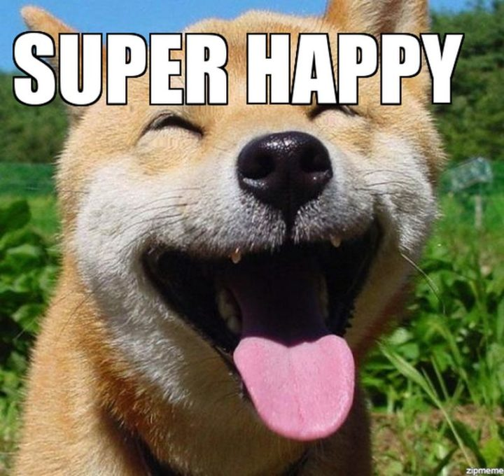 "85 Happy Memes - ""Super happy."""