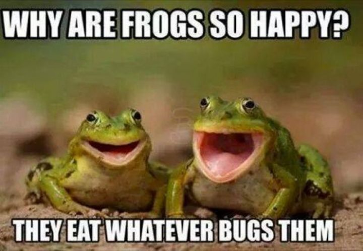 "85 Happy Memes - ""Why are frogs so happy? They eat whatever bugs them."""