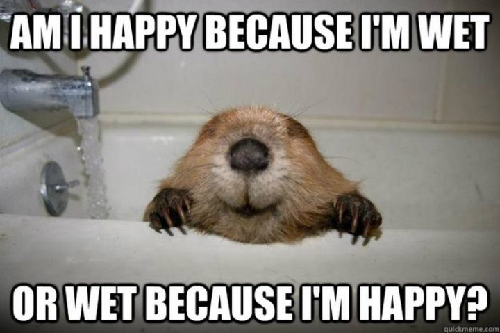 "85 Happy Memes - ""Am I happy because I'm wet or wet because I'm happy?"""
