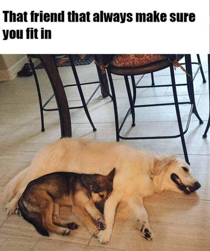 "85 Happy Memes - ""That friend that always make sure you fit in."""