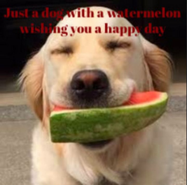"85 Happy Memes - ""Just a dog with a watermelon wishing you a happy day."""