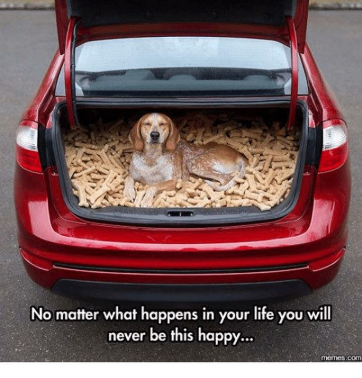 "85 Happy Memes - ""No matter what happens in your life, you will never be this happy..."""