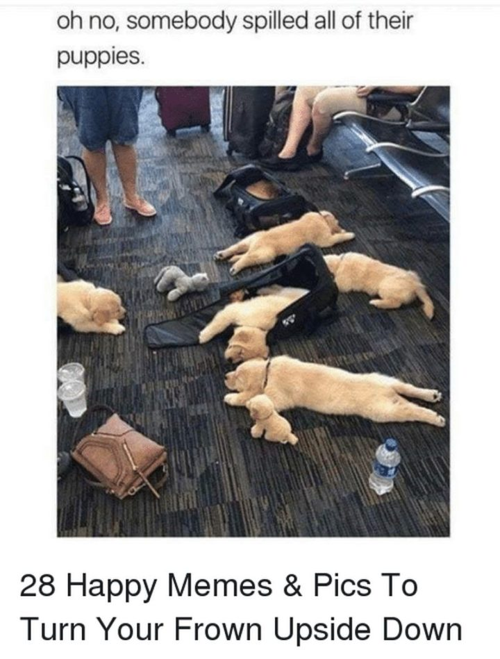 "85 Happy Memes - ""Oh no, somebody spilled all of their puppies."""