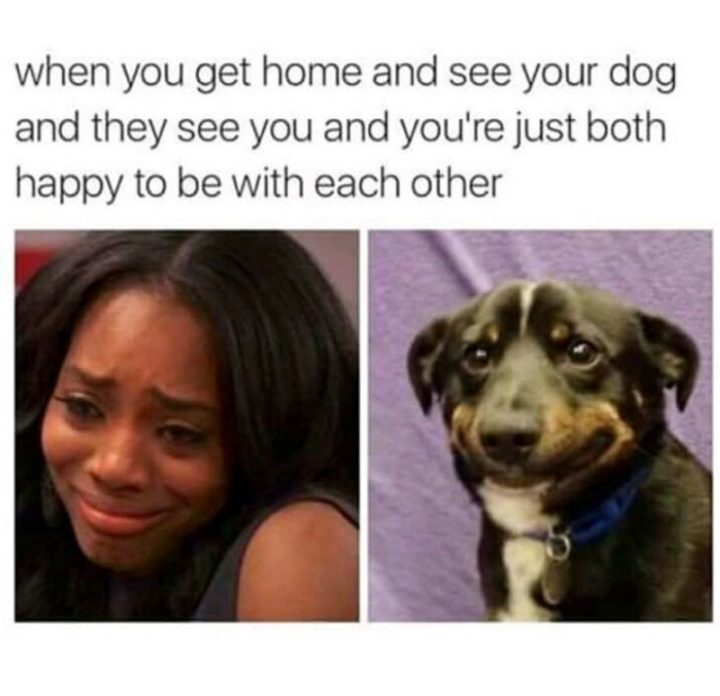 "85 Happy Memes - ""When you get home and see your dog and they see you and you're just both happy to be with each other."""