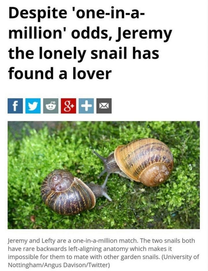 "85 Happy Memes - ""Despite 'one-in-a-million' odds, Jeremy the lonely snail has found a lover. Jeremy and Lefty are a one-in-a-million match. The two snails both have rare backwards left-aligning anatomy which makes it impossible for them to mate with other garden snails."""