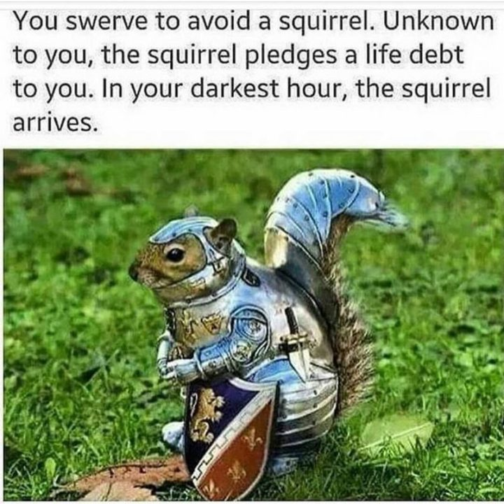 "85 Happy Memes - ""You swerve to avoid a squirrel. Unknown to you, the squirrel pledges a life debt to you. In your darkest hour, the squirrel arrives."""