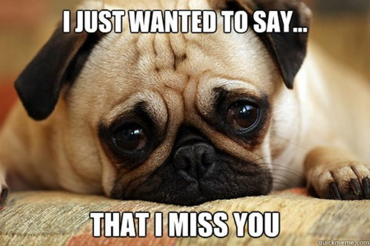 "101 I miss you memes - ""I just wanted to say...that I miss you."""