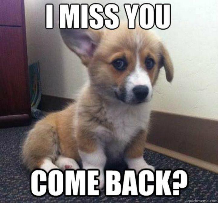 "101 I miss you memes - ""I miss you. Come back?"""