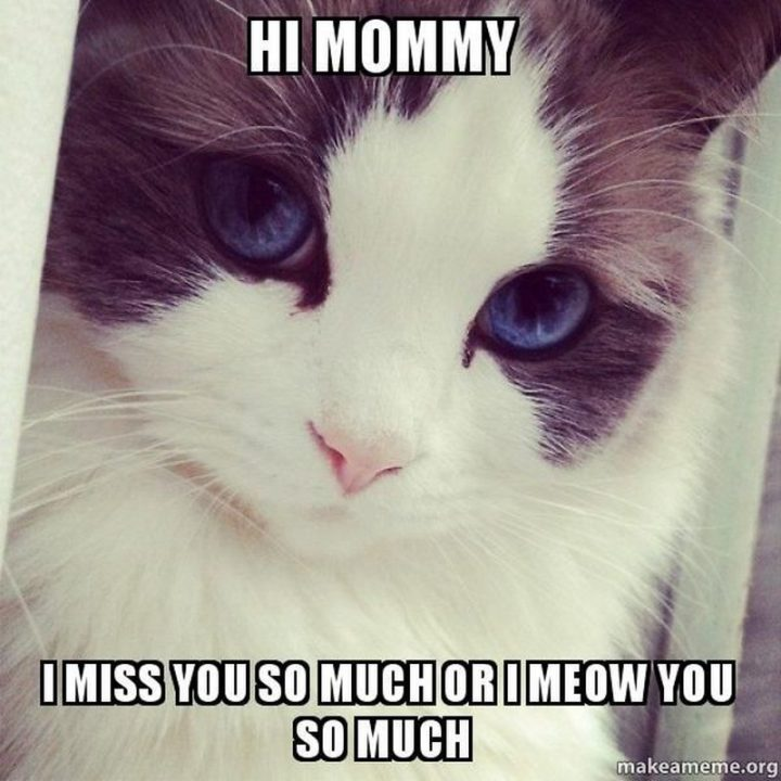 "101 I miss you memes - ""Hi mommy, I miss you so much or I meow you so much."""