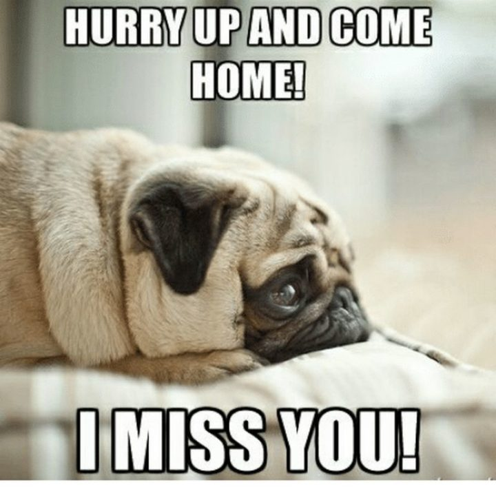 101 Sincere I Miss You Memes To Share With People You Love And Miss