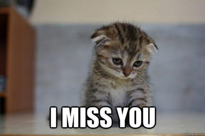 """101 I miss you memes - """"I miss you."""""""