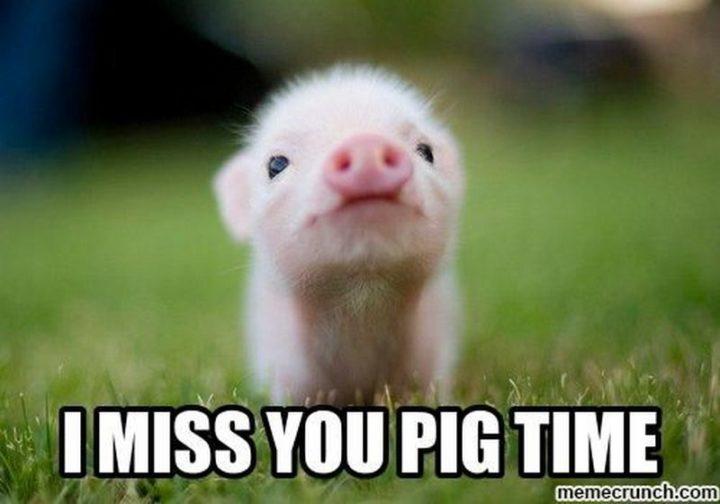 "101 I miss you memes - ""I miss you pig time."""