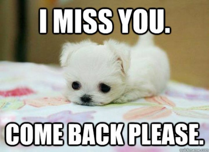 "101 I miss you memes - ""I miss you. Come back please."""