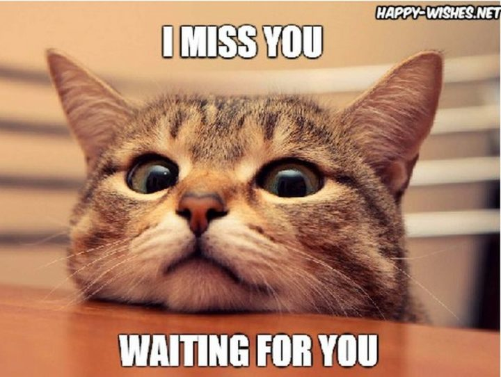 "101 I miss you memes - ""I miss you. Waiting for you."""