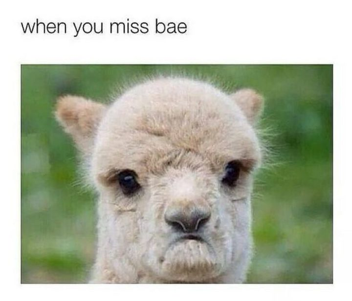 "101 I miss you memes - ""When you miss bae."""
