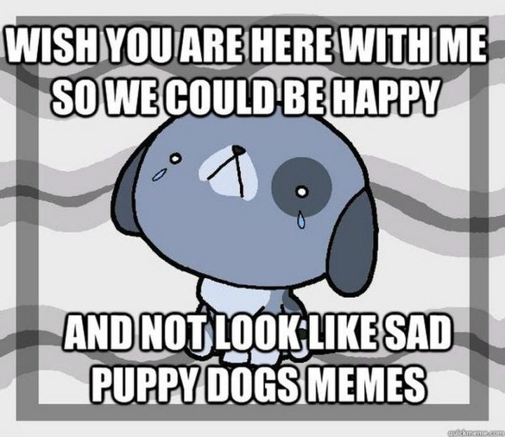 "101 I miss you memes - ""Wish you are here with me so we could be happy and not look like sad puppy dog memes."