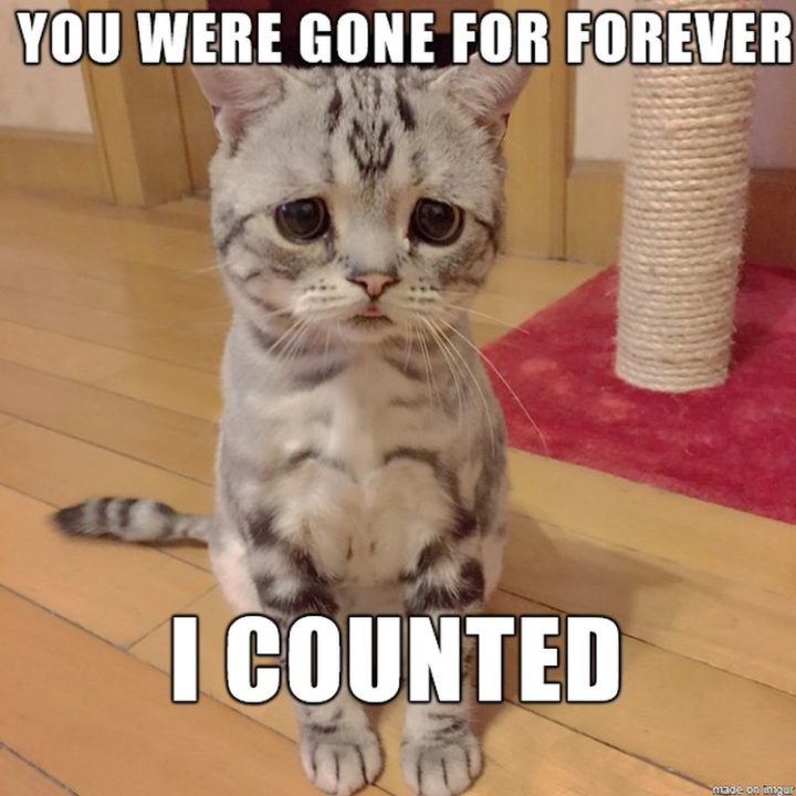 "101 I miss you memes - ""You were gone for forever. I counted."""