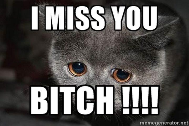 """101 I miss you memes - """"I miss you b***h!!!!"""""""