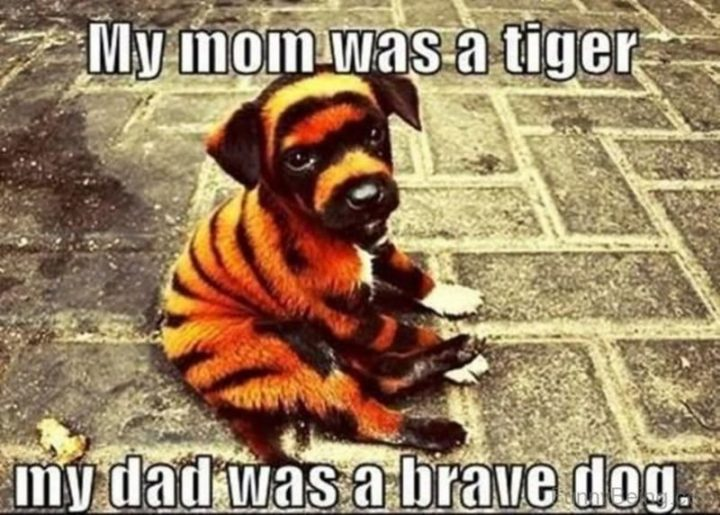 "71 Funny Dad Memes - ""My mom was a tiger. My dad was a brave dog."