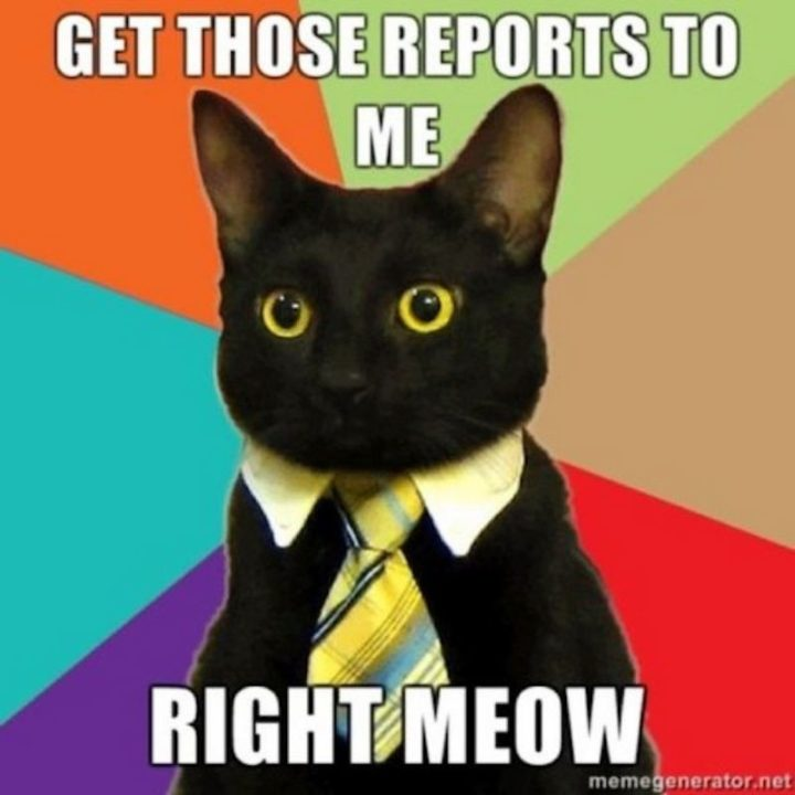 "Hilariously Funny Memes - ""Get those reports for me right meow."""