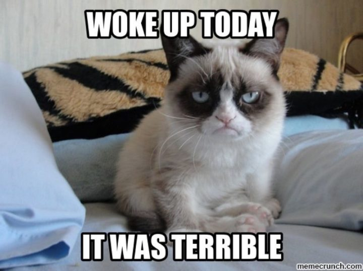 "Hilariously Funny Memes - ""Woke up today. It was terrible."""