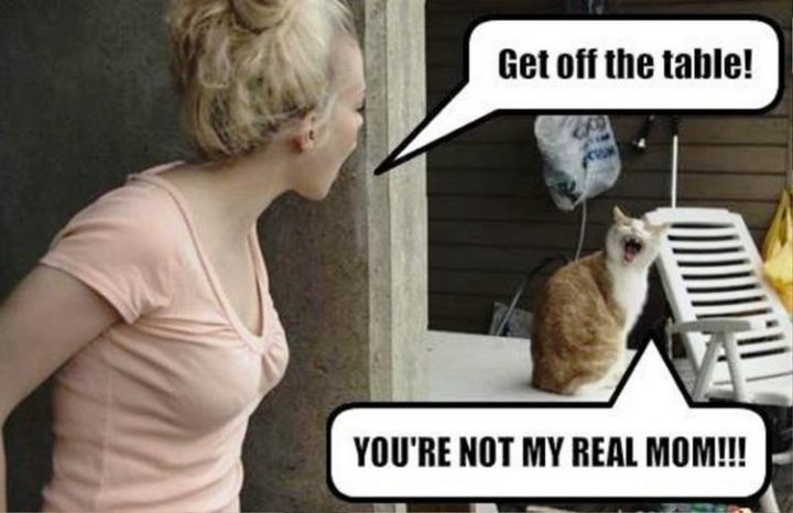 "101 Funny Mom Memes - ""Get off the table! You're not my real mom!!!"""