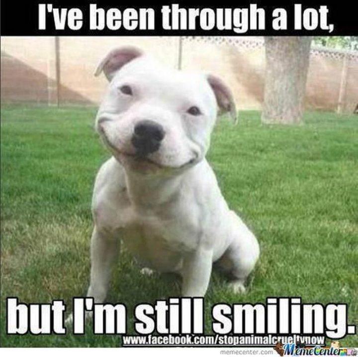 "101 Smile Memes - ""I've been through a lot, but I'm still smiling."""