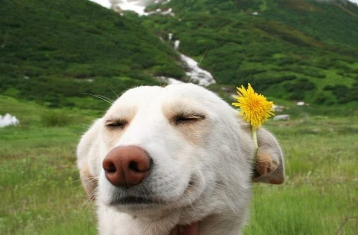 101 Smile Memes - Dog with dandelion in his ear.