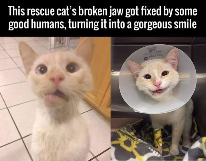 """101 Smile Memes - """"This rescue cat's broken jaw got fixed by some good humans, turning it into a gorgeous smile."""""""