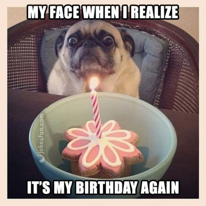 "101 It's My Birthday Memes - ""My face when I realize it's my birthday again."""