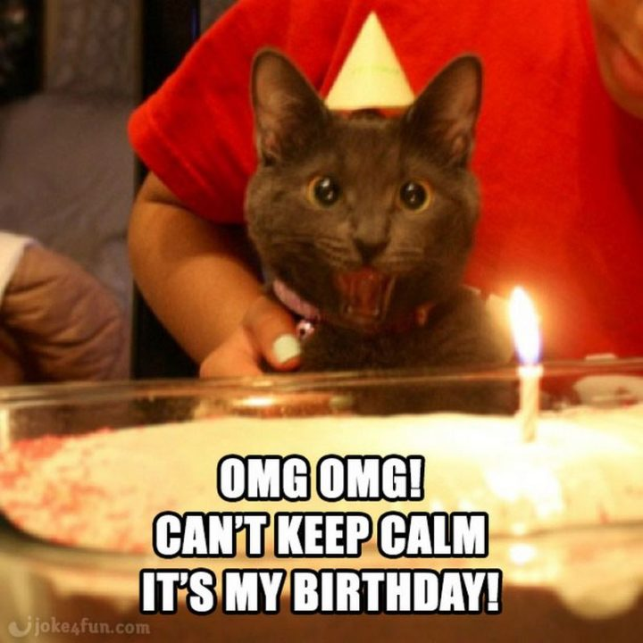 "101 It's My Birthday Memes - ""OMG OMG! Can't keep calm. It's my birthday!"""