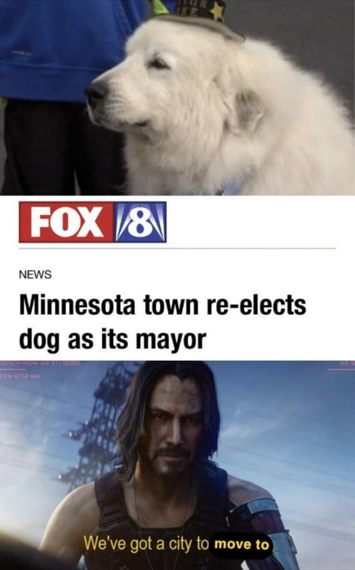 "57 Keanu Reeves Memes - ""Fox 8 News: Minnesota town re-elects dog as its mayor. Keanu: We've got a city to move to."""