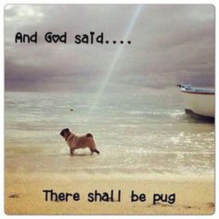"101 Cute Pug Memes - ""And God said...There shall be pug."""